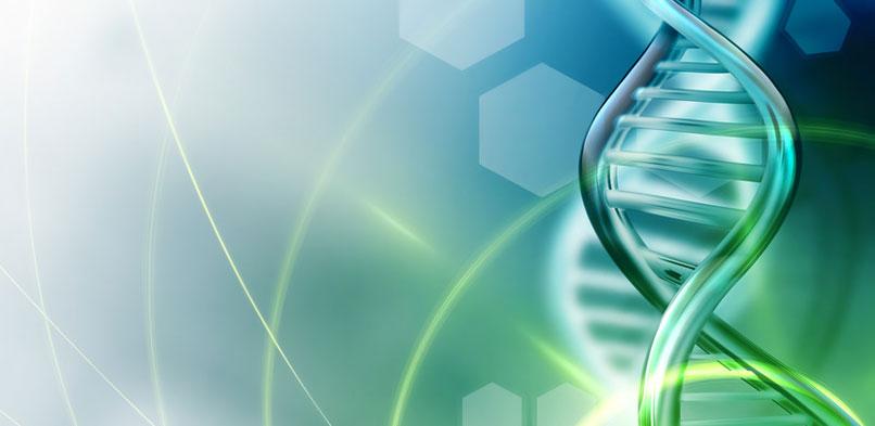 Reprogrammation de l'ADN